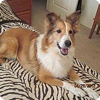 Adopt A Pet :: Sandy - apache junction, AZ