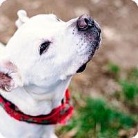 Adopt A Pet :: BIZI - Terre Haute, IN