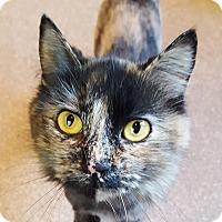 Adopt A Pet :: Shasta - Salisbury, MA