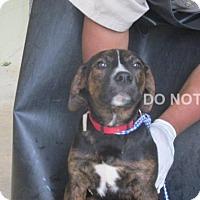 Adopt A Pet :: Donna - Rocky Mount, NC
