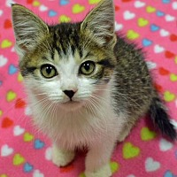Adopt A Pet :: Abbott - Morgantown, WV