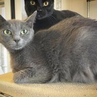 Adopt A Pet :: Delta - Fredericksburg, TX