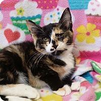 Adopt A Pet :: Sansa - Berlin, CT