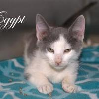 Adopt A Pet :: Egypt - Middleburg, FL