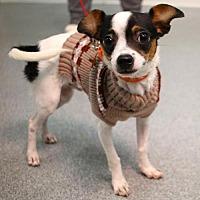 Adopt A Pet :: Roy - Princeton, MN