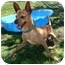 Photo 3 - Chihuahua Mix Dog for adoption in San Clemente, California - JAVIER