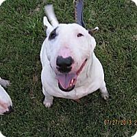 Adopt A Pet :: Izzy - Sachse, TX