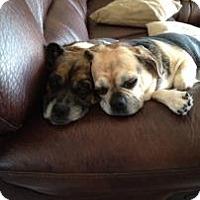 Adopt A Pet :: Kaylie - Phoenix, AZ