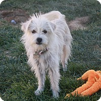 Adopt A Pet :: Lizzi - California City, CA