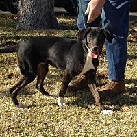 Adopt A Pet :: Hilda - Slidell, LA
