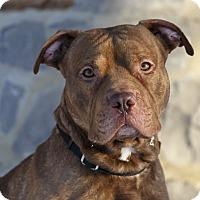 Adopt A Pet :: Keeva - Rigaud, QC