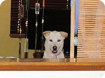 Jindo Dog for adoption in Los Angeles, California - Holly