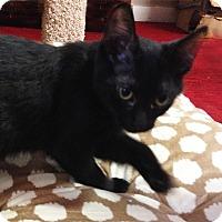 Adopt A Pet :: Cabaret - N. Billerica, MA
