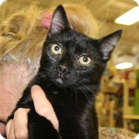 Adopt A Pet :: Buzz - Hazlet, NJ