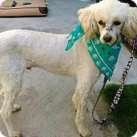 Adopt A Pet :: Cloud - San Diego, CA