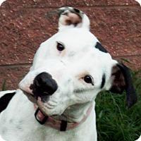 Adopt A Pet :: Kiara - Oxford, MS