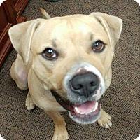 Adopt A Pet :: Truman - Cranston, RI