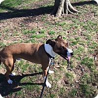 Adopt A Pet :: Griffin (COURTESY POST) - Baltimore, MD