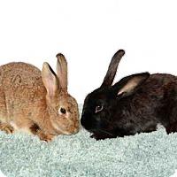 Adopt A Pet :: GUETTA - Murray, UT
