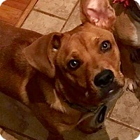 Adopt A Pet :: Tiny Tim - Charlotte, NC