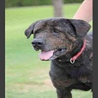 Adopt A Pet :: BRUCE - Mesa, AZ