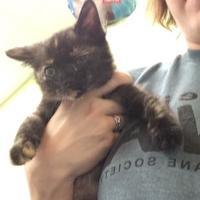 Adopt A Pet :: Janice Ian - Lynchburg, VA