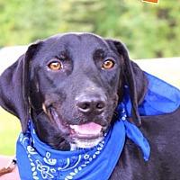 Adopt A Pet :: Fitz - Batesville, AR