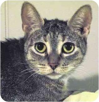 Domestic Mediumhair Cat for adoption in St. Clements, Ontario - Freska