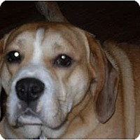 Adopt A Pet :: Brock - Newport, VT
