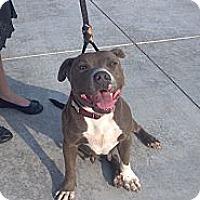 Adopt A Pet :: Tessa - Owasso, OK