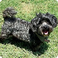 Adopt A Pet :: Peppi - San Angelo, TX