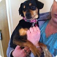 Adopt A Pet :: Wink - Rockaway, NJ