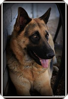 German Shepherd Dog Dog for adoption in Phoenix, Arizona - Doom