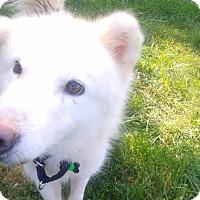 Adopt A Pet :: Gandolf - Augusta County, VA