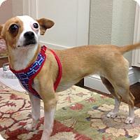 Adopt A Pet :: Marley - Cerritos, CA