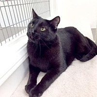 Adopt A Pet :: Armando - Westlake Village, CA