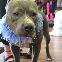 Adopt A Pet :: Joey - Baltimore, MD