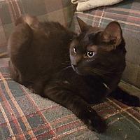 Adopt A Pet :: Ursula - Vancouver, BC