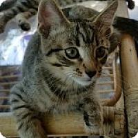Adopt A Pet :: Daniel - McHenry, IL