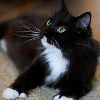 Adopt A Pet :: Mama Moon - Spruce Grove, AB