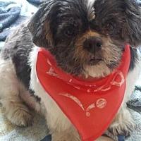 Adopt A Pet :: Steve Harrigan - Euless, TX