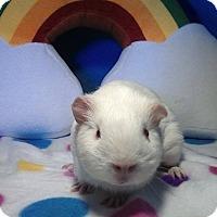 Adopt A Pet :: Vanora - Trenton, NC