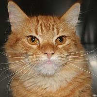 Adopt A Pet :: DUNCAN - Clayton, NJ