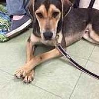 Adopt A Pet :: Martin - Elmsford, NY