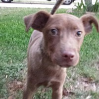 Adopt A Pet :: Leo1 - Olympia, WA