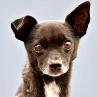 Adopt A Pet :: Vince - Evans, CO