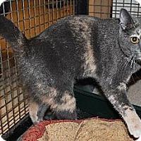Calico Cat for adoption in Lacon, Illinois - Kimmie
