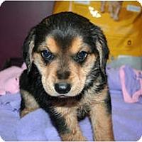 Adopt A Pet :: Arni - Westfield, IN