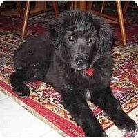 Adopt A Pet :: Zach - Scottsdale, AZ
