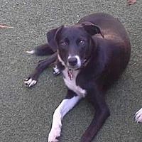 Adopt A Pet :: Noah - Evansville, IN